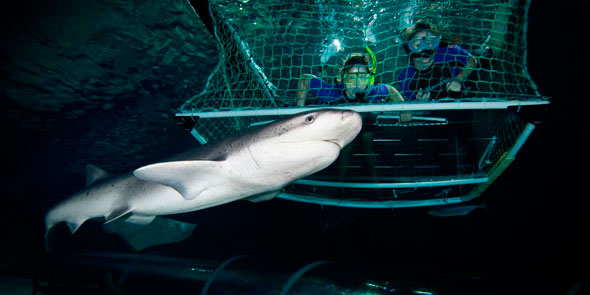 sl-shark-cage-a-feature-home.jpg
