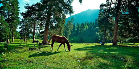 horse-590.jpg
